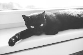 cat-791180_960_720